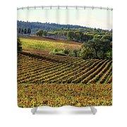 Vineyard 22 Shower Curtain