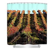 Vineyard 27 Shower Curtain