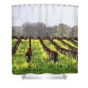 Vineyard In Westfield Shower Curtain