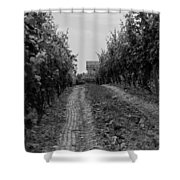 vineyard of old BW Shower Curtain
