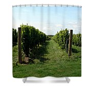 Vineyard On The Peninsula Shower Curtain