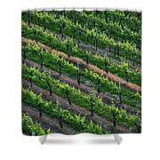 Vineyard Rows - Slovenia Shower Curtain