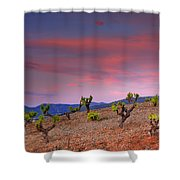 Vineyards At Sunset In Spain Shower Curtain