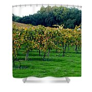 Vineyards In California Shower Curtain