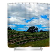Vineyards In Paso Robles Shower Curtain