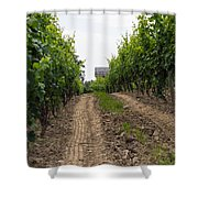 Vineyards Of Old Color Shower Curtain