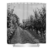 Vineyards Of Old Horizontal Bw Shower Curtain