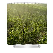 Vineyards Shrouded In Fog Shower Curtain