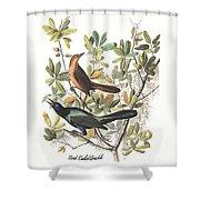 Vintage Boat-tailed Grackles Audubon Shower Curtain