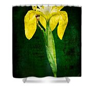 Vintage Canna Lily Shower Curtain