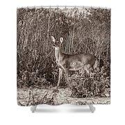 Vintage Deer Shower Curtain