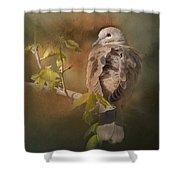 Vintage Dove Shower Curtain