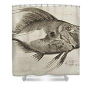 Vintage Fish Print Shower Curtain