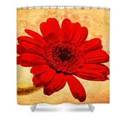 Vintage Gerbera Daisy Shower Curtain