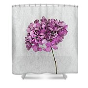 Vintage Hydrangea Shower Curtain