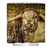 Vintage Longhorn Cattle Shower Curtain