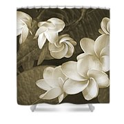 Vintage Plumeria Shower Curtain