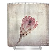 Vintage Protea Flower Shower Curtain