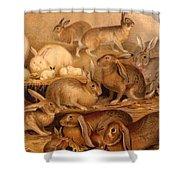Vintage Rabbit Hutch Shower Curtain
