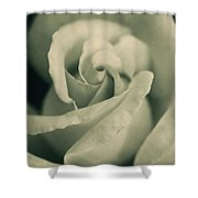 Vintage Rose In Green Shower Curtain