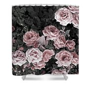 Vintage Roses In Pink 2  Shower Curtain