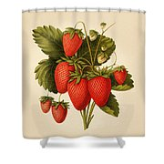 Vintage Strawberries Shower Curtain