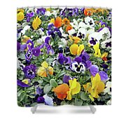 Viola In The Spring Are Especially Beautiful. Shower Curtain