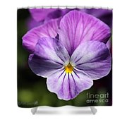 Viola Named Columbine Shower Curtain