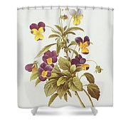 Viola Tricolour  Shower Curtain by Pierre Joseph Redoute