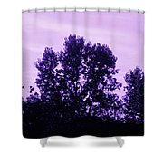 Violet And Black Trees  Shower Curtain