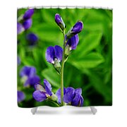 Violet Blue Shower Curtain