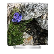 Violet Climbing  Shower Curtain