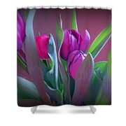 Violet Colored Tulips Shower Curtain