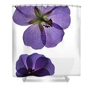 Violet Cranesbill Shower Curtain