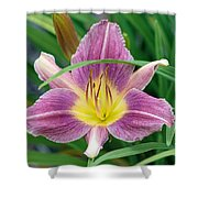 Violet Day Lily Shower Curtain