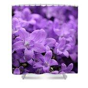 Violet Dream V Shower Curtain
