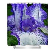 Violet Iris Shower Curtain