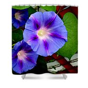 Violet Morning Glories Shower Curtain