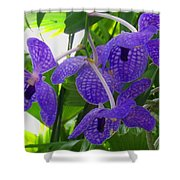 Violet Orchid Trio Shower Curtain
