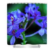Violet Orchids Shower Curtain