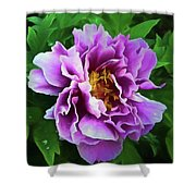 Violet Peony Shower Curtain