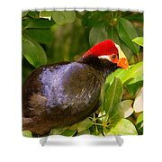 Violet Plantain Eater Shower Curtain