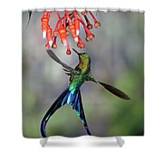 Violet-tailed Sylph Feeding Shower Curtain