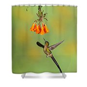Violet-tailed Sylph Hummingbird Shower Curtain