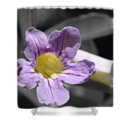Violet Trumpet Vine Selective Color Shower Curtain