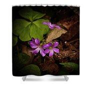 Violet Wood Sorrel Shower Curtain