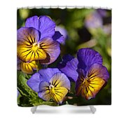 Violets 15-01 Shower Curtain