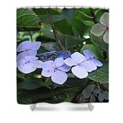Violets O The Green Shower Curtain