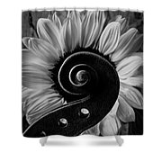 Violin Scroll And Sunflower In Black And White Shower Curtain