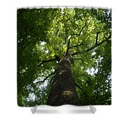Virgin Canopy Shower Curtain